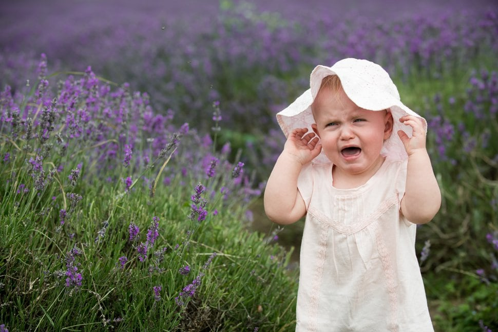 crying baby, lavender fields, hitchin lavender